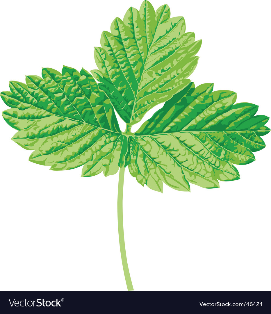 Strawberry leaf vector | Price: 1 Credit (USD $1)