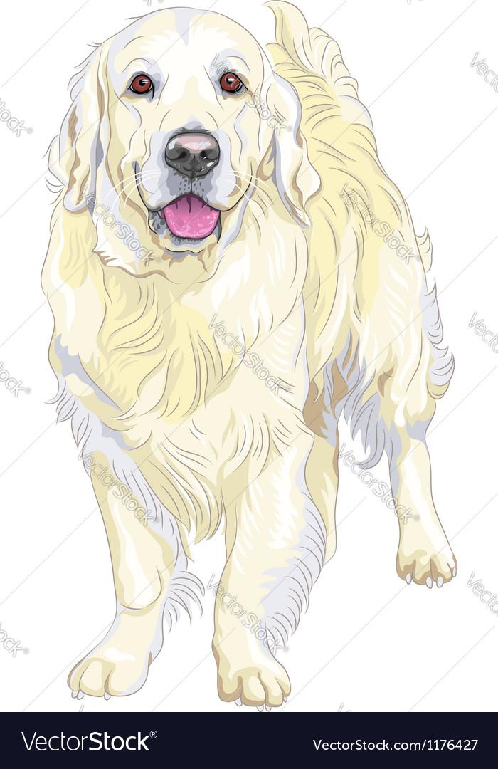 Dog breed labrador retriever vector | Price: 3 Credit (USD $3)