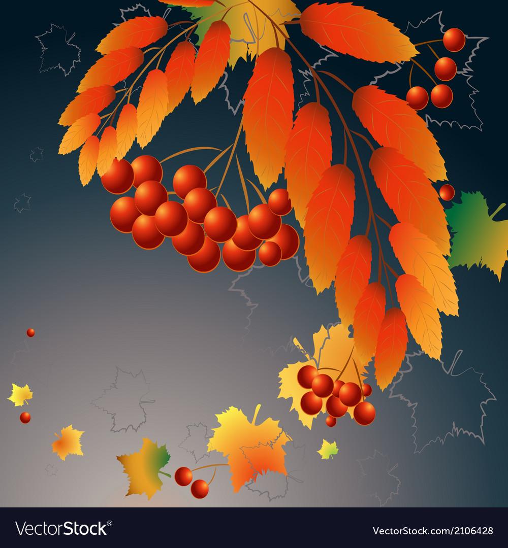 Dark berries vector | Price: 1 Credit (USD $1)