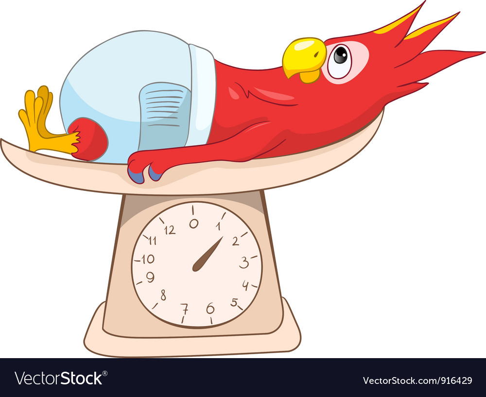 Parrot schoolboy vector | Price: 1 Credit (USD $1)