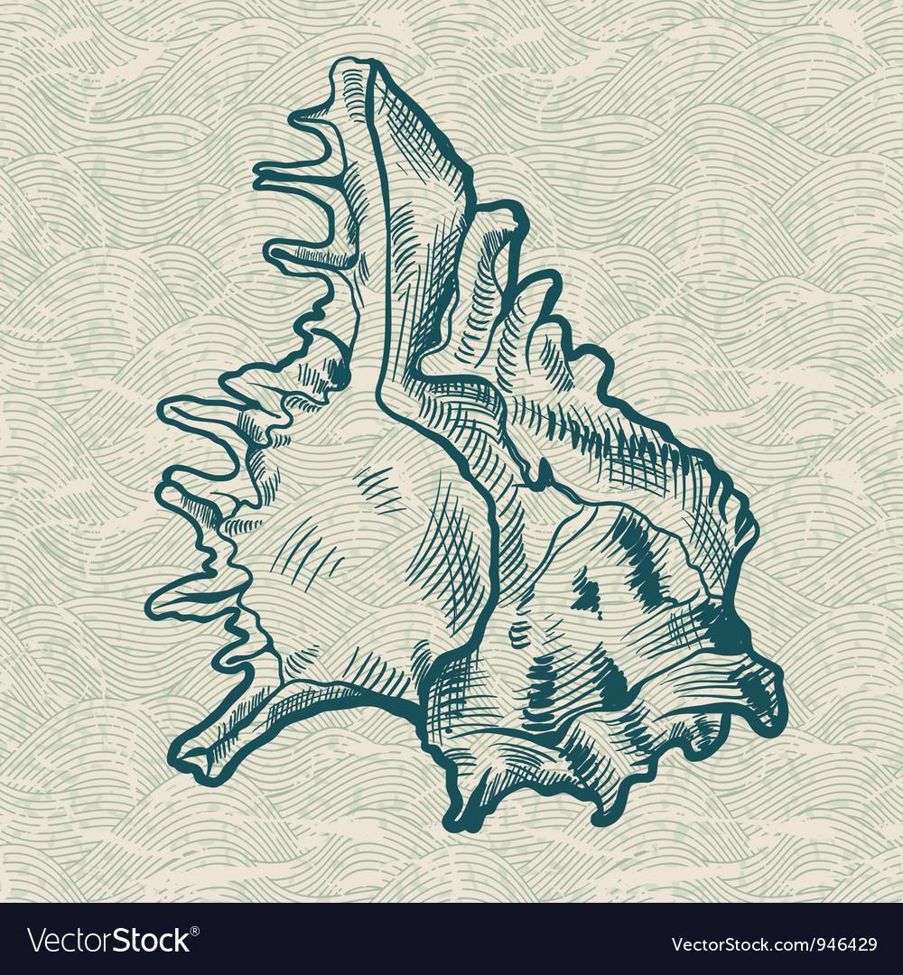 Sea shells conch background vector   Price: 1 Credit (USD $1)