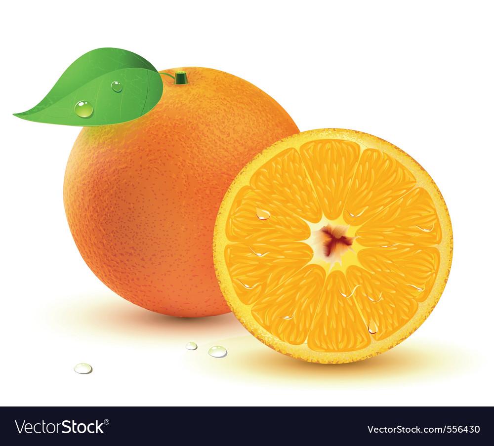 Juicy oranges vector | Price: 1 Credit (USD $1)
