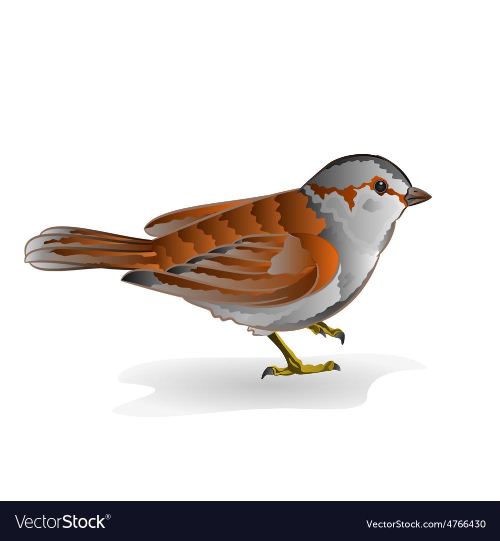 Little bird cub sparrow passer domesticus vector | Price: 1 Credit (USD $1)