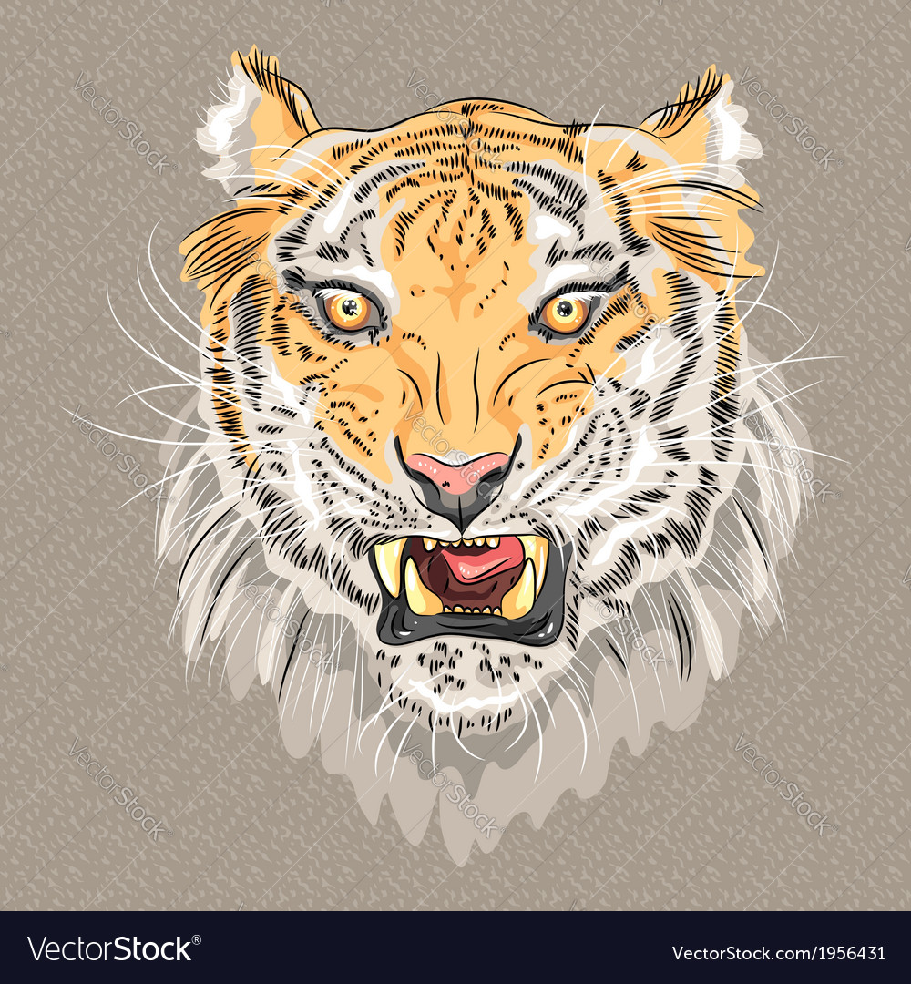 Menacing growling amur tiger vector | Price: 1 Credit (USD $1)