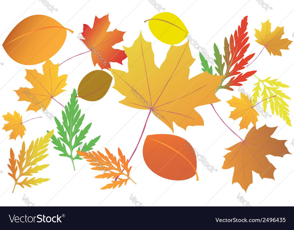 Bright autumn leaves vector | Price: 1 Credit (USD $1)