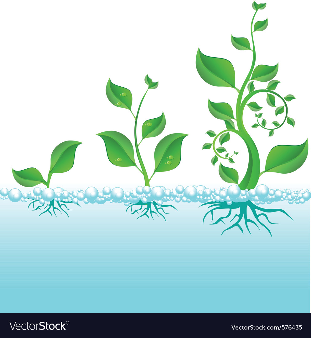 Water plant growth vector | Price: 1 Credit (USD $1)