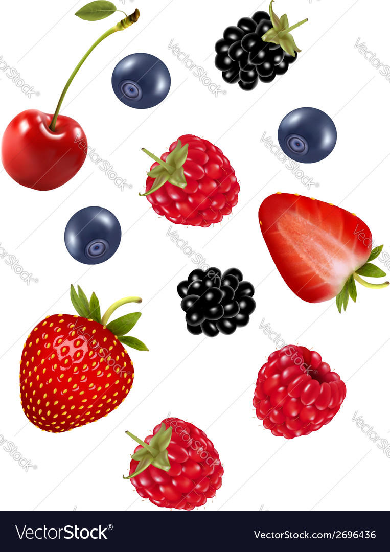 Set of juicy berries vector | Price: 1 Credit (USD $1)