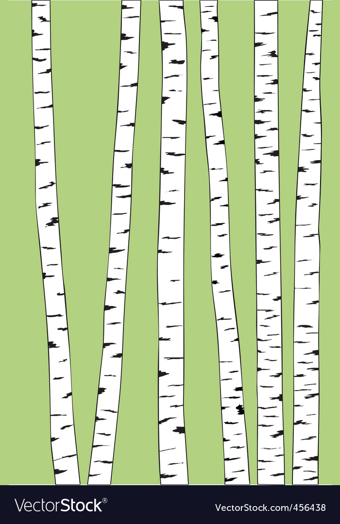 Birch trunk trees background vector | Price: 1 Credit (USD $1)