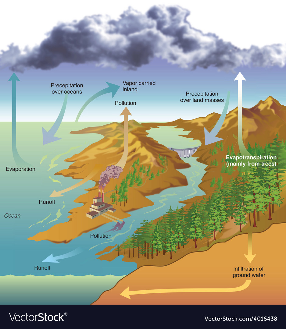 Hydrologic cycle vector | Price: 3 Credit (USD $3)