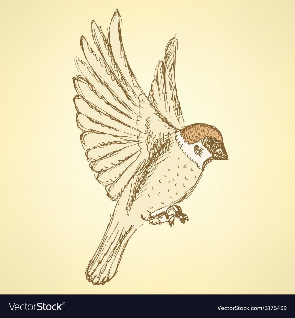 Sketch cute sparrow vector | Price: 1 Credit (USD $1)