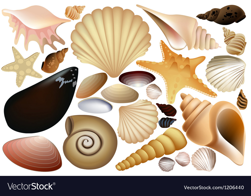 Shell collection vector | Price: 1 Credit (USD $1)