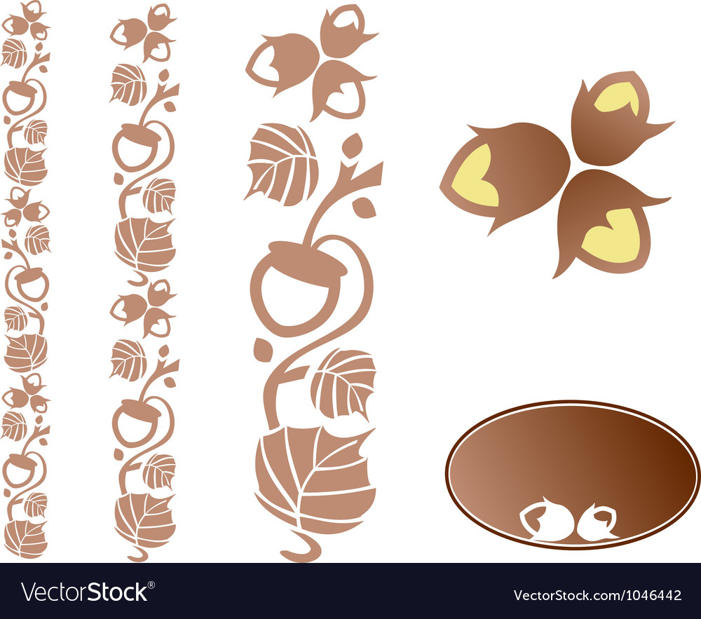 Hazelnut ornament vector | Price: 1 Credit (USD $1)