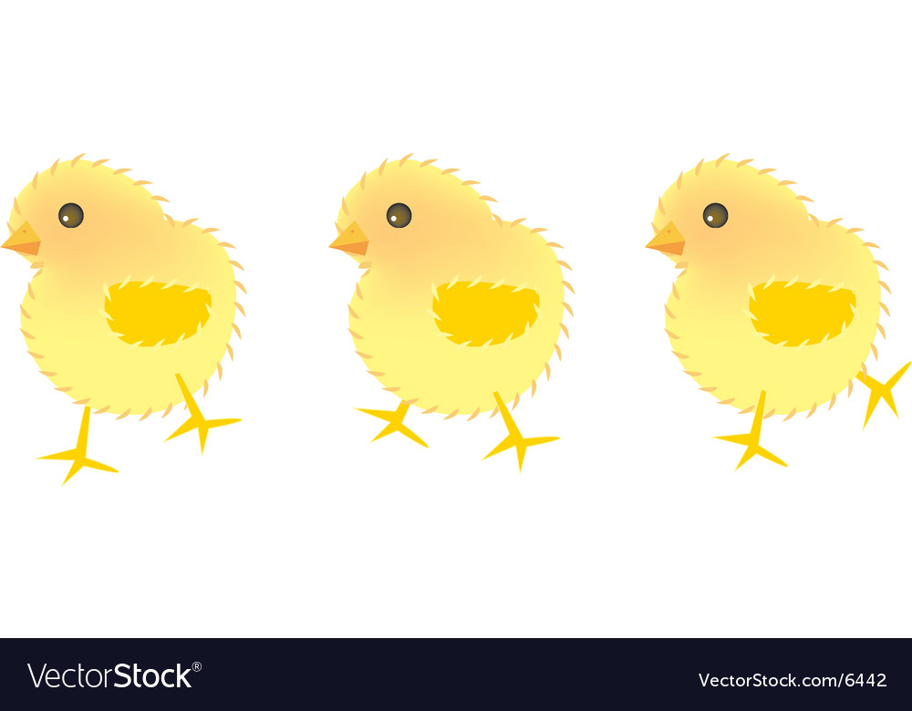 Three chick vector | Price: 1 Credit (USD $1)