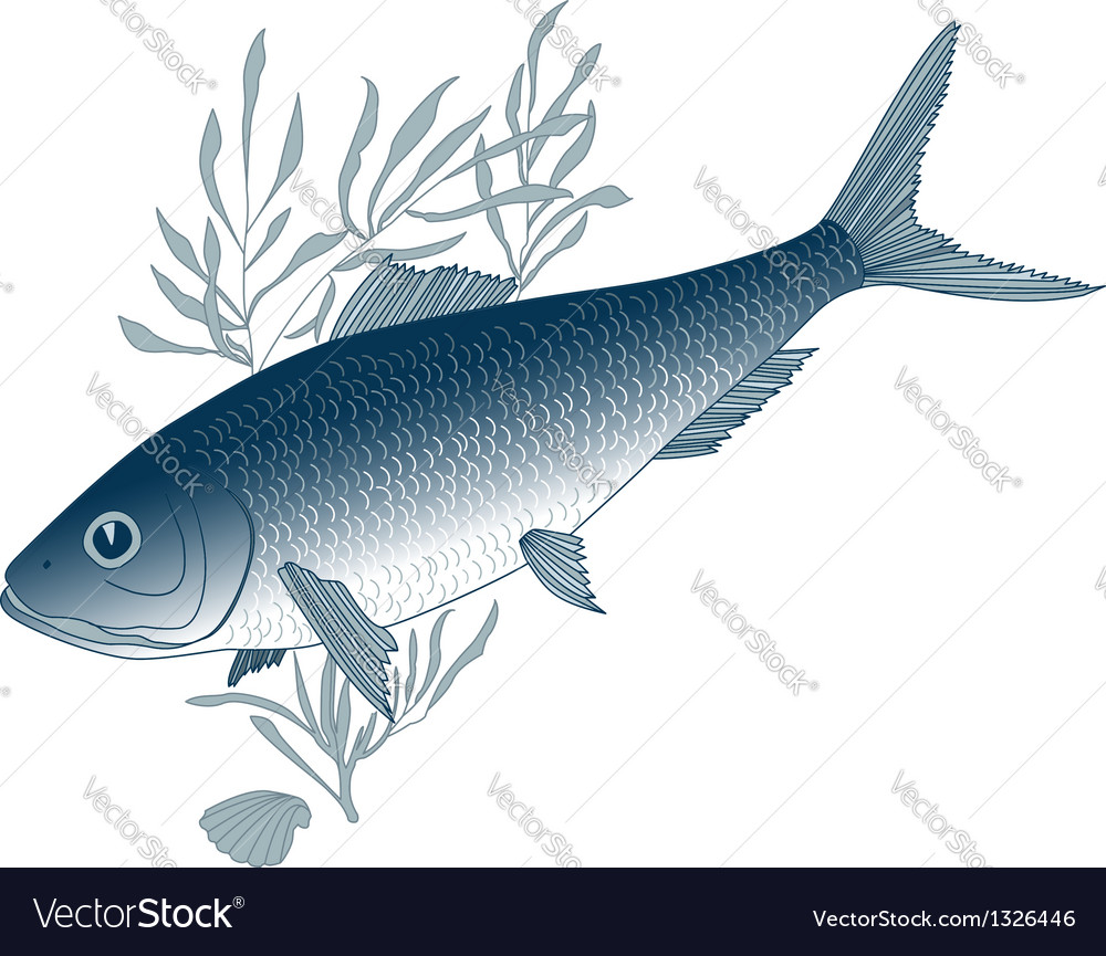Fish herring vector | Price: 1 Credit (USD $1)