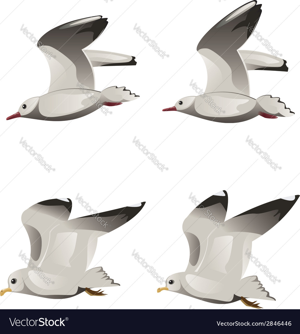 Flying seagulls vector | Price: 1 Credit (USD $1)