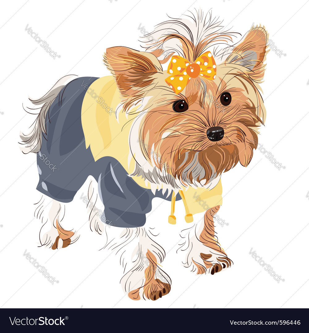 Yorkshire terrier vector | Price: 5 Credit (USD $5)