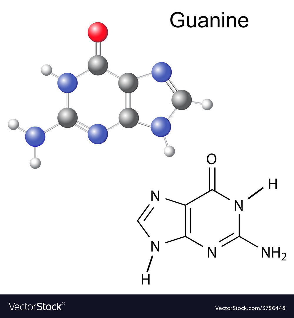 Chemical structural formula and model of guanine vector | Price: 1 Credit (USD $1)