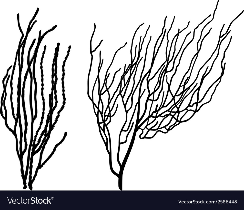 Corals vector | Price: 1 Credit (USD $1)