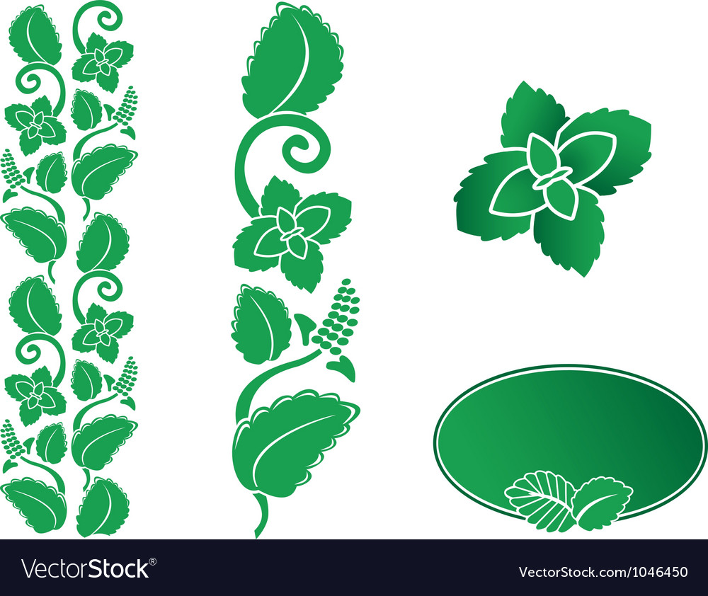 Mint ornament vector | Price: 1 Credit (USD $1)