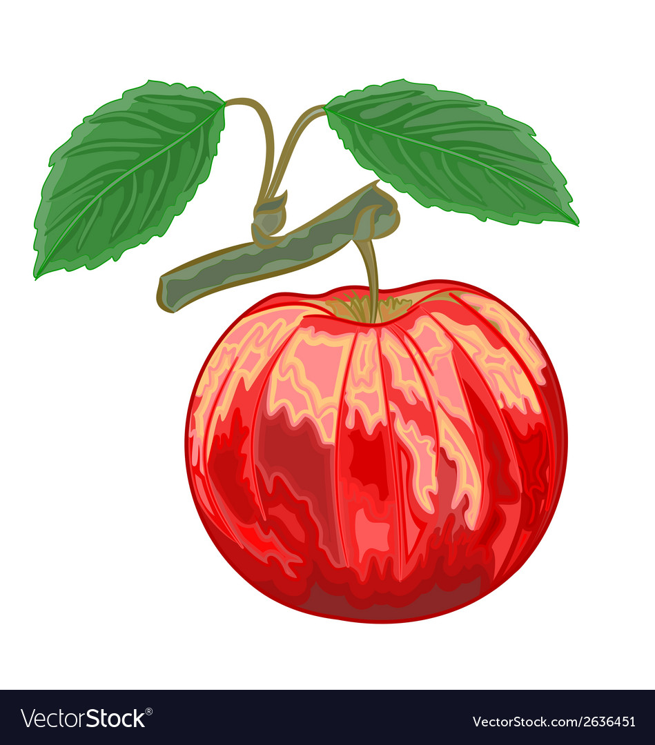 Red apple with green leaves vector | Price: 1 Credit (USD $1)
