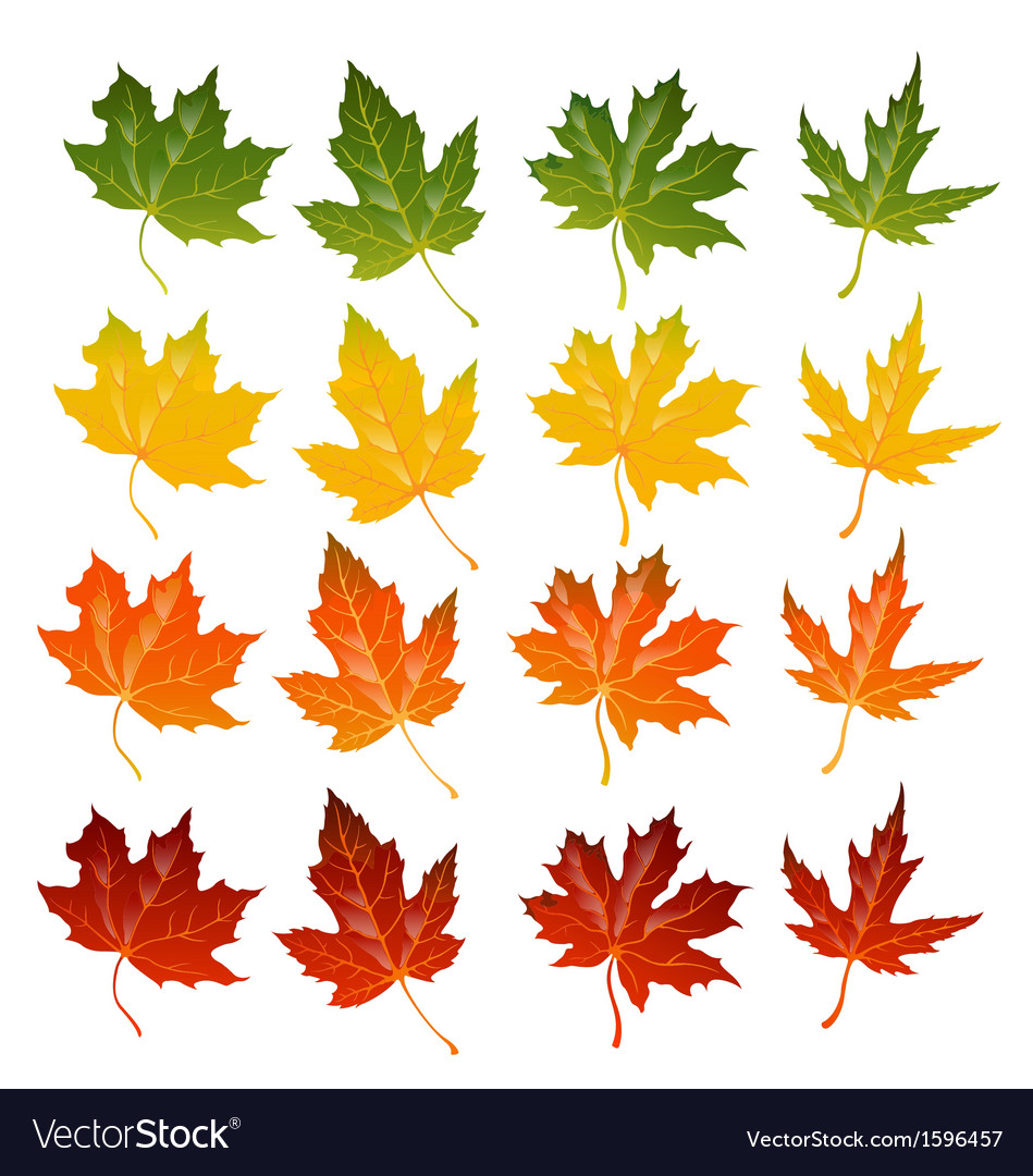 Maple leaves icon set vector | Price: 1 Credit (USD $1)