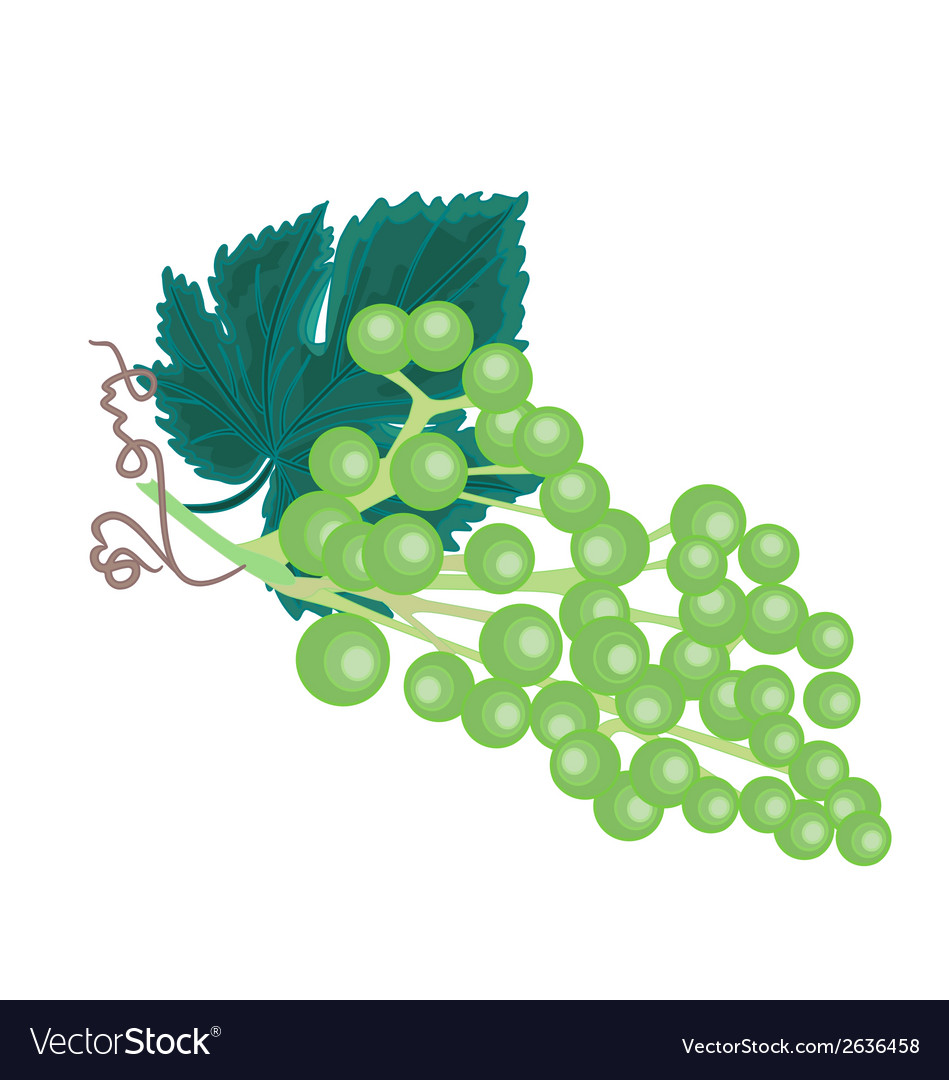 Grapevine background vector | Price: 1 Credit (USD $1)