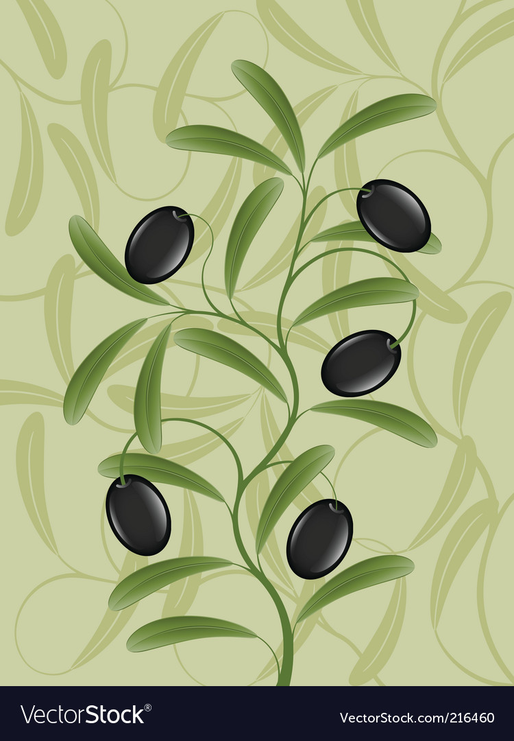 Olive branch vector | Price: 1 Credit (USD $1)
