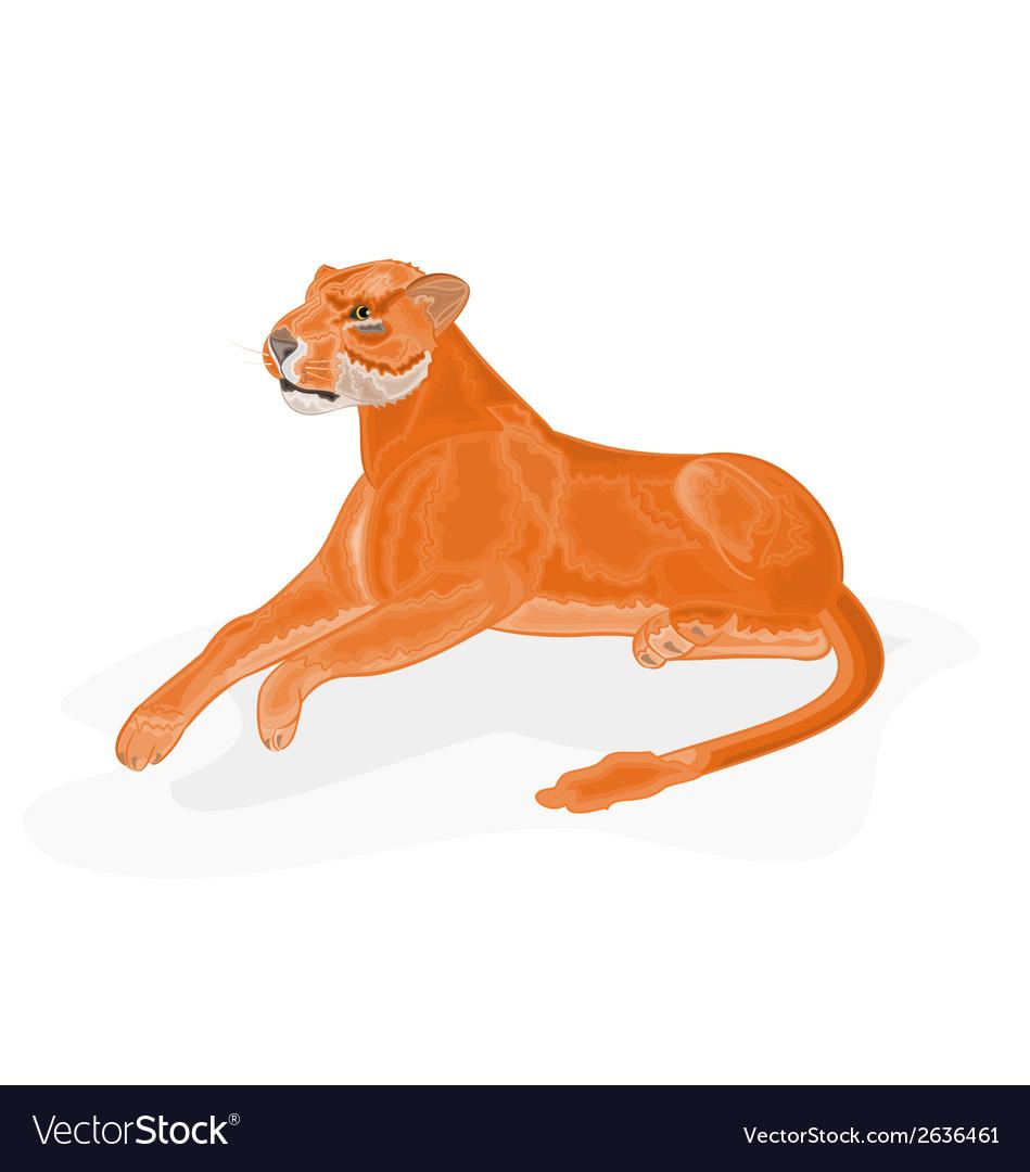 Lioness vector | Price: 1 Credit (USD $1)