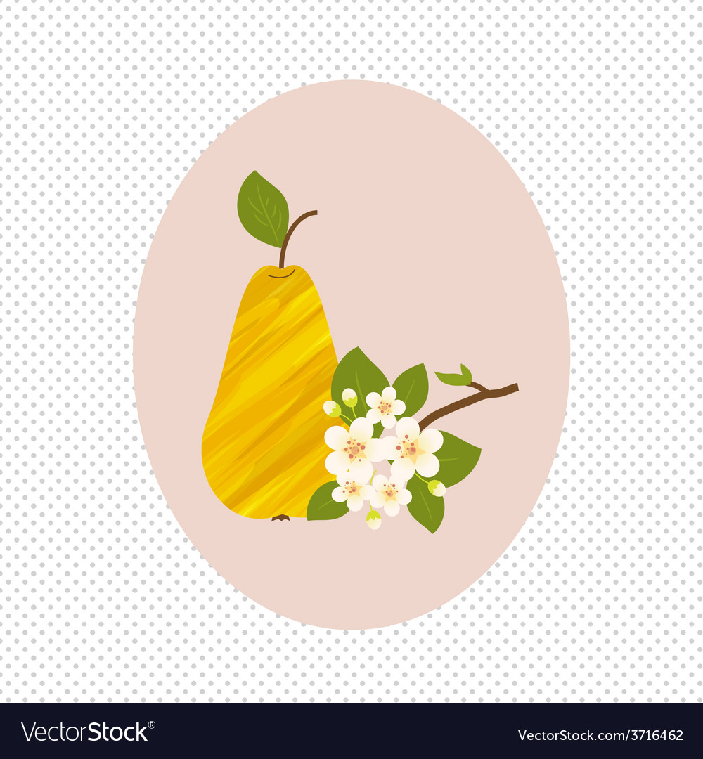 Pear fruit and flower blossom spring healthy vector | Price: 1 Credit (USD $1)