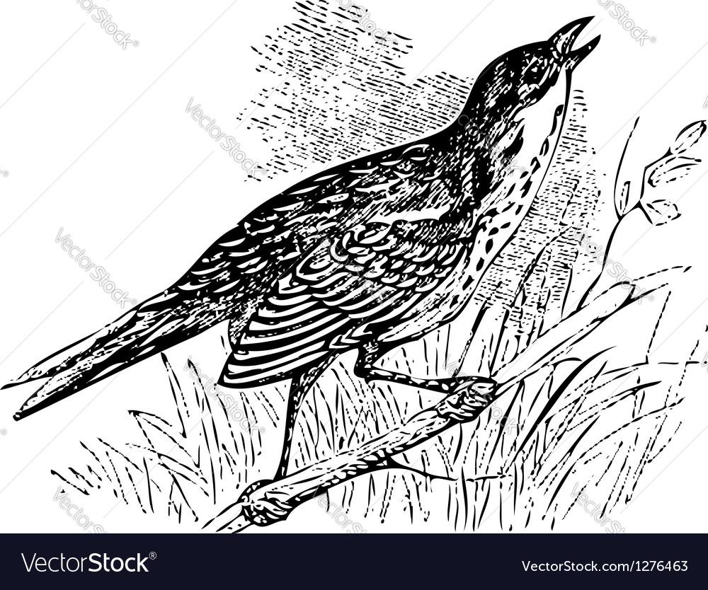 Saltmarsh sharp-tailed sparrow singing vector | Price: 1 Credit (USD $1)