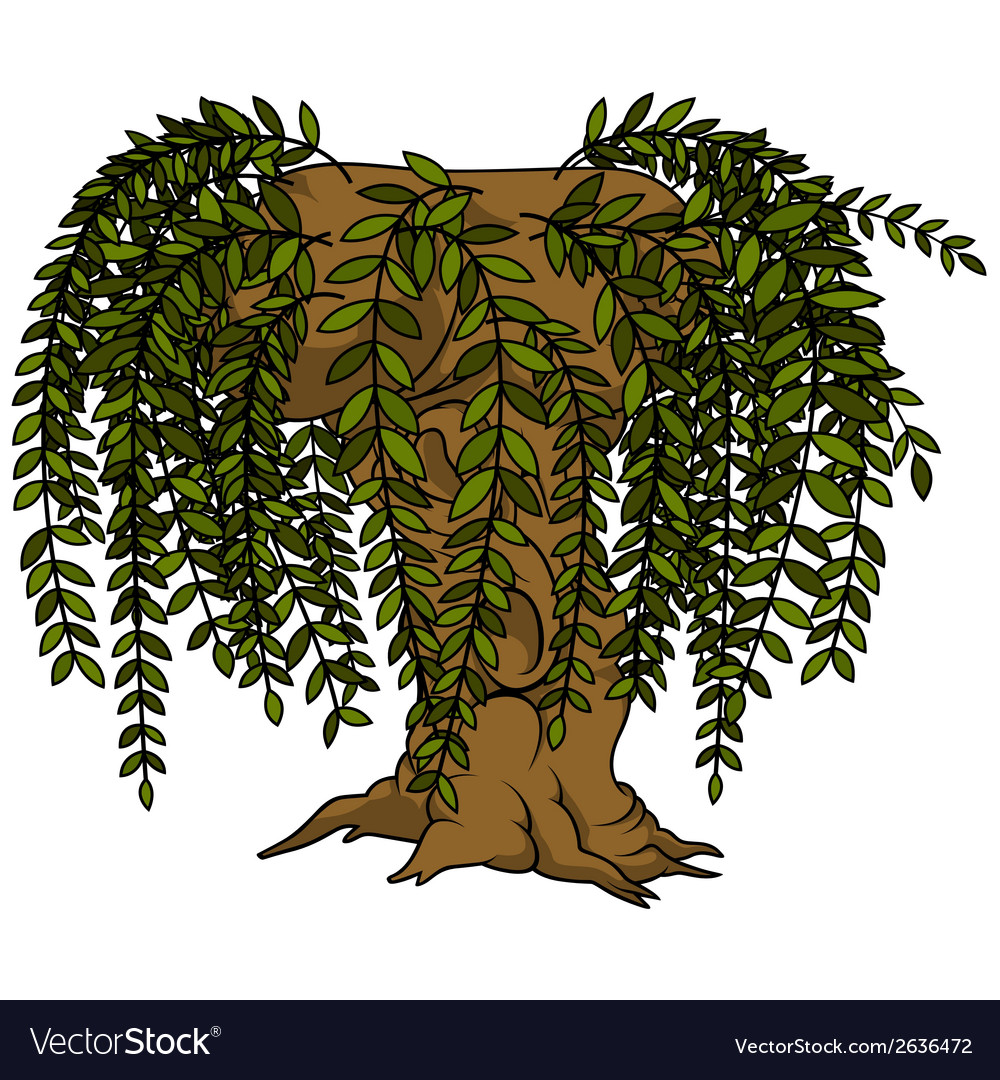 Willow tree vector | Price: 1 Credit (USD $1)