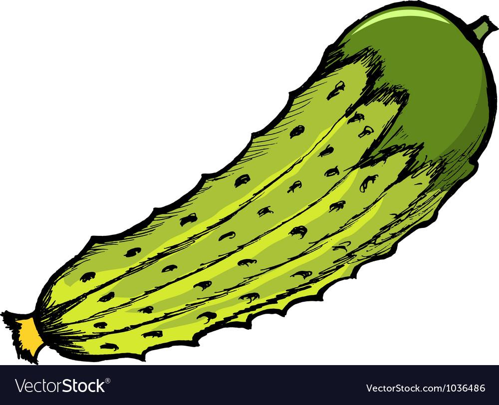 Cucumber vector | Price: 1 Credit (USD $1)