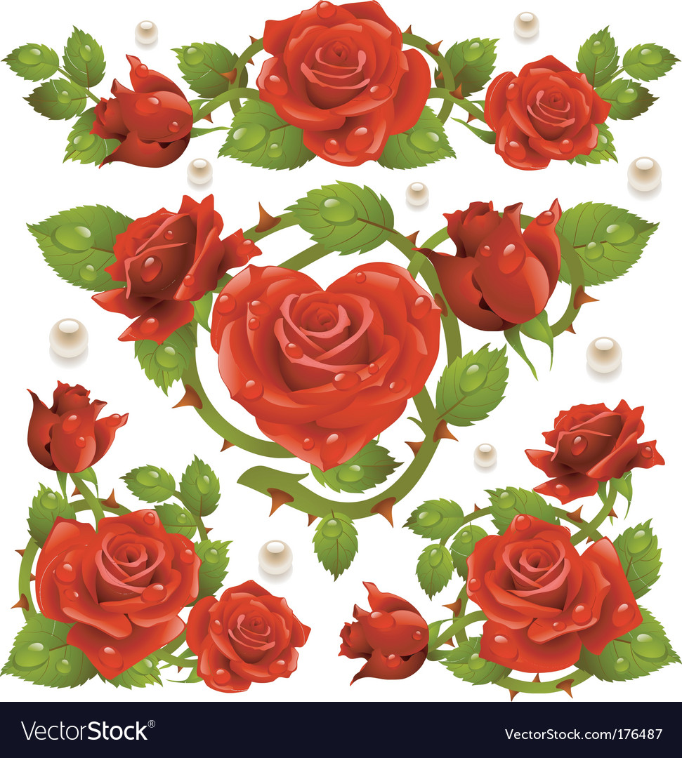 Rose design elements vector | Price: 3 Credit (USD $3)