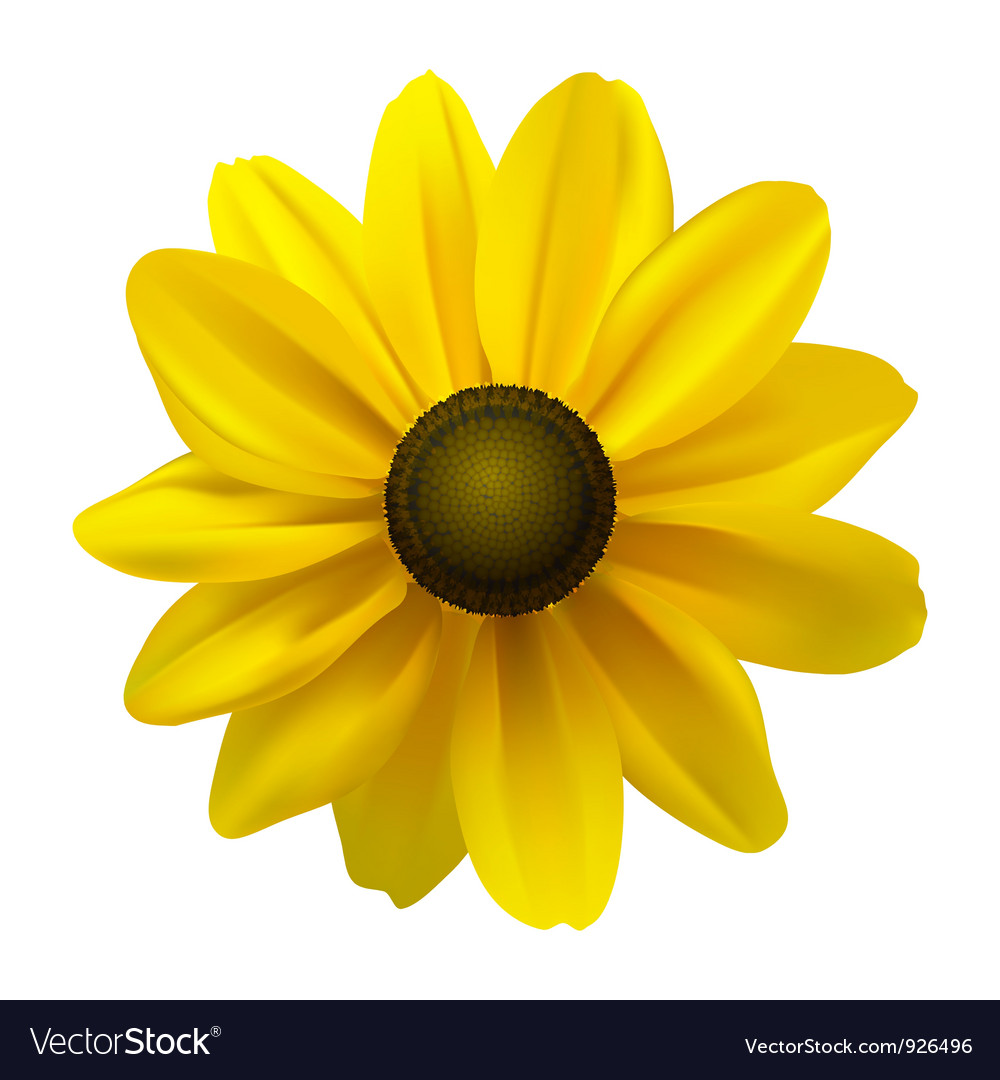 Black eyed susan vector | Price: 1 Credit (USD $1)