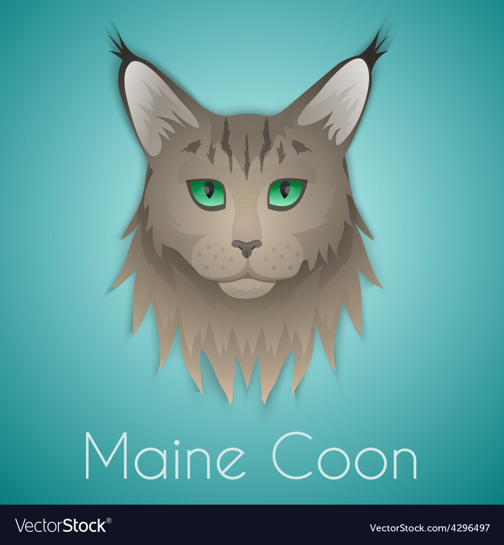 Maine coon vector | Price: 1 Credit (USD $1)