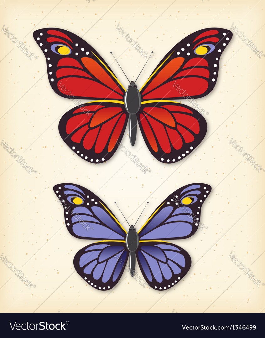 Summer butterfly set vector | Price:  Credit (USD $)