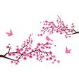 Sacura branches vector