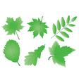 editable green leaves vector