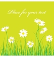 Cute chamomile floral background vector