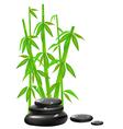 Zen stones with bamboo vector