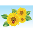 Sunflowers and ladybird vector