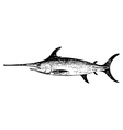 Old engraving of a swordfish vector