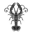 Ornate sea langoustine vector