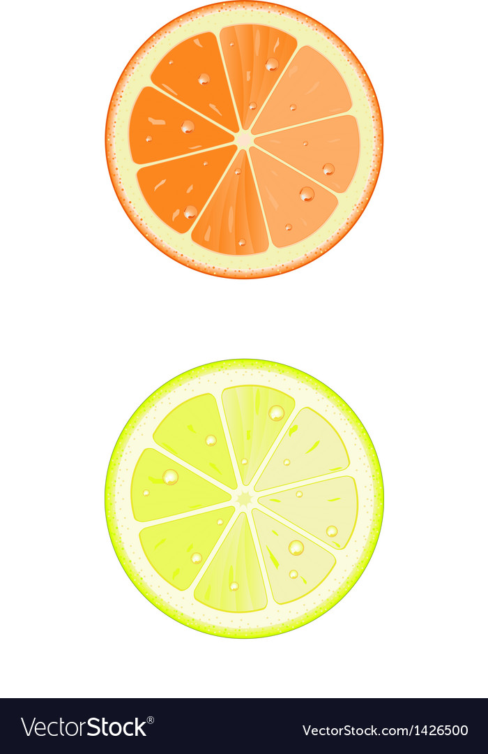 Lemon and orange slice vector | Price: 1 Credit (USD $1)