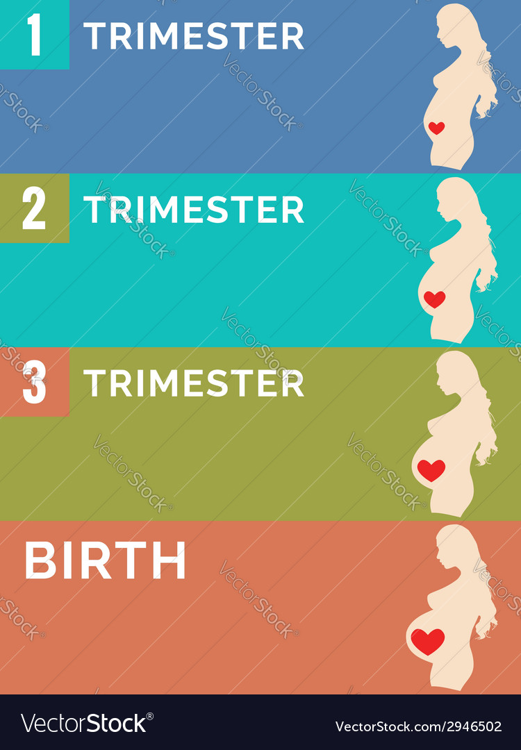 Pregnancy stages infographic vector | Price: 1 Credit (USD $1)