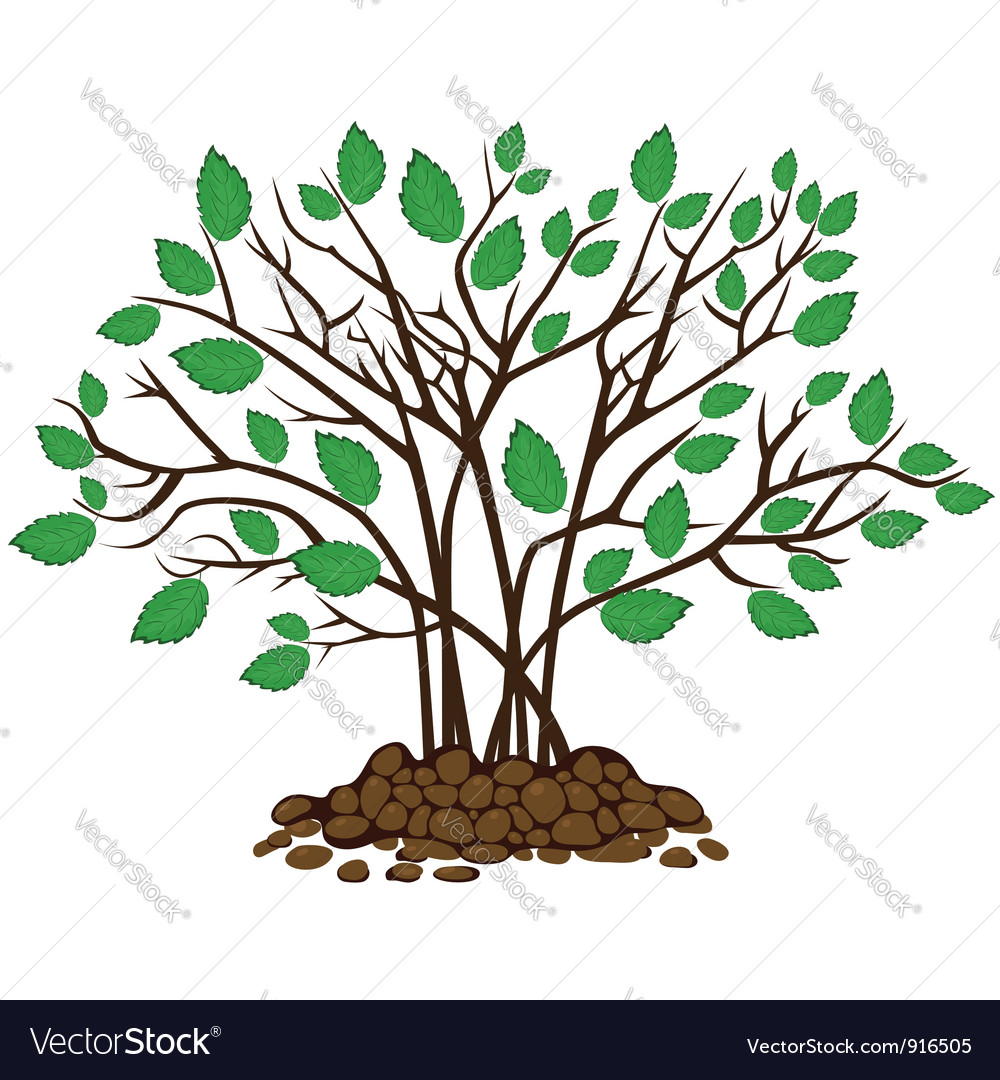 Bush with leaves in the soil vector | Price: 1 Credit (USD $1)
