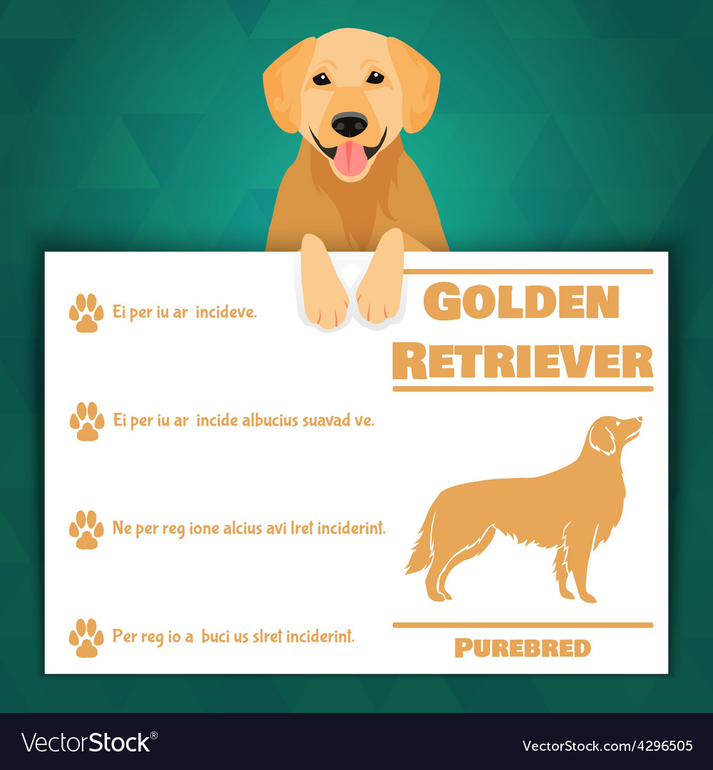Golden retriever dog banner vector | Price: 1 Credit (USD $1)