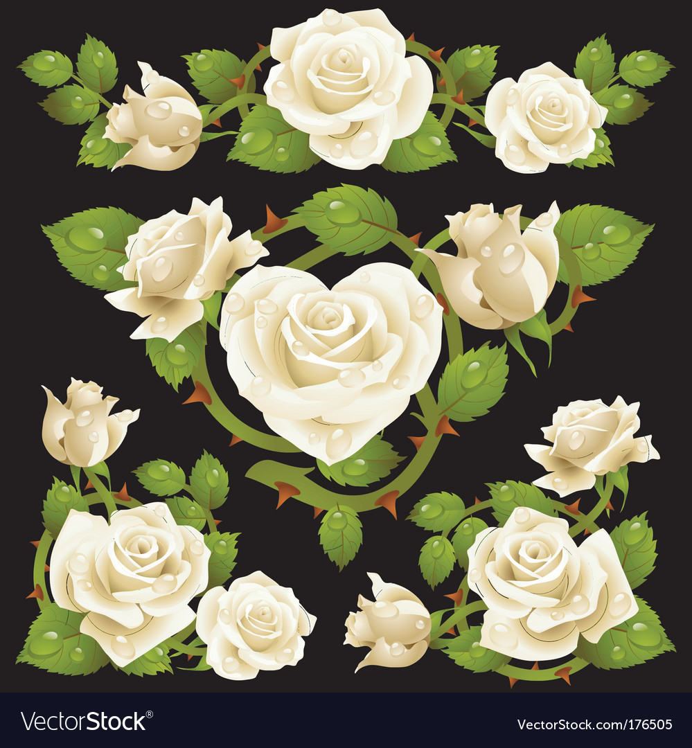 White rose design elements vector | Price: 3 Credit (USD $3)