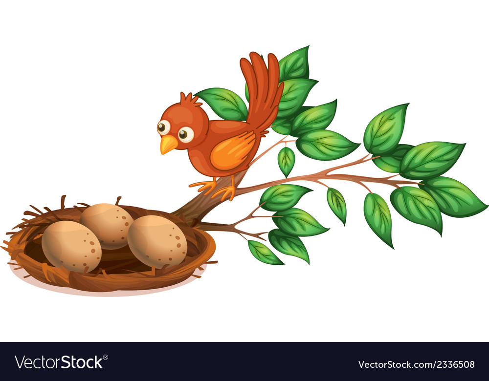 A bird watching the eggs vector | Price: 1 Credit (USD $1)