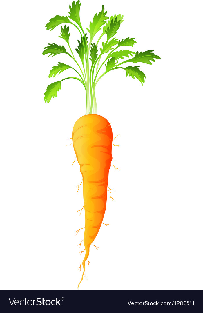 A carrot vector | Price: 1 Credit (USD $1)